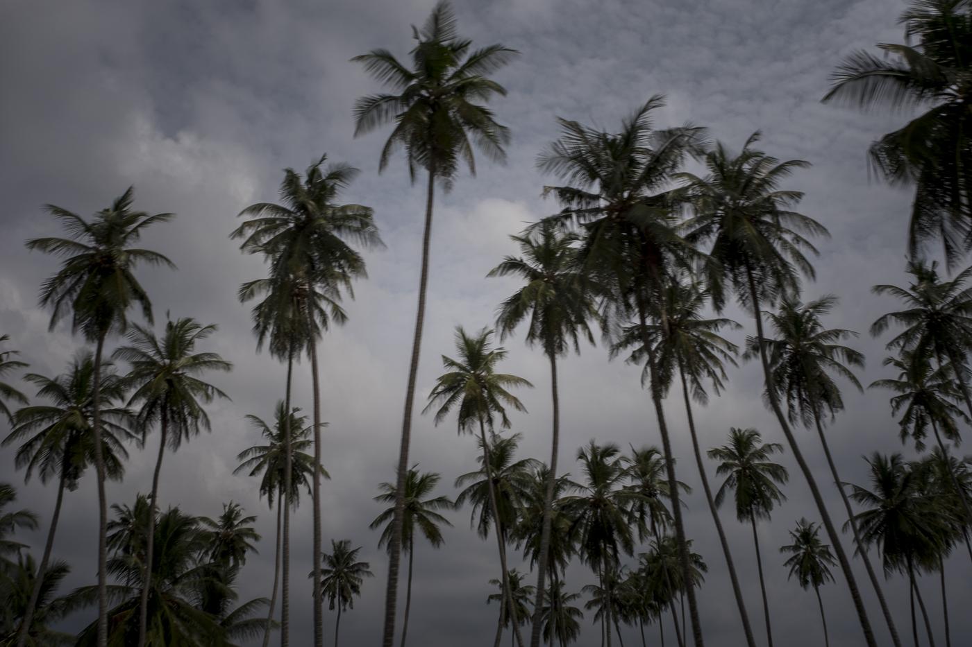 © Luís Rocha. São Tomé, São Tomé e Príncipe, 2016.