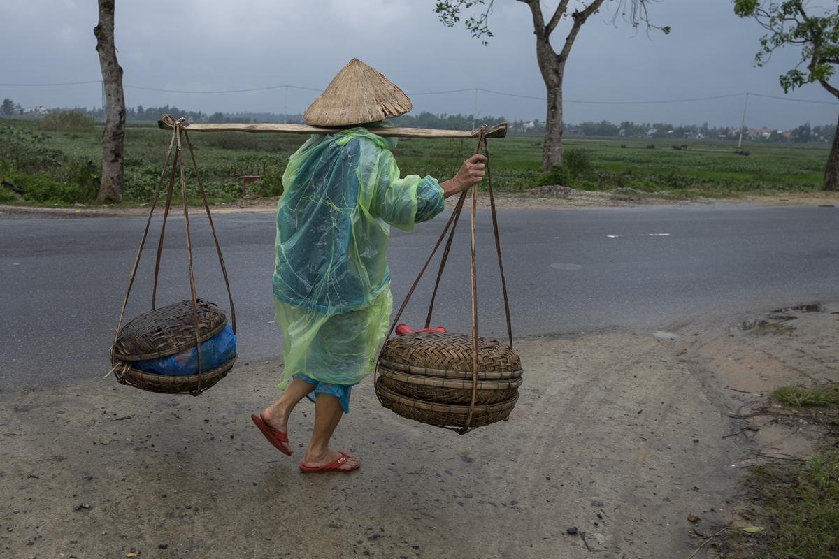 Plantações de arro, Hoi an. Vietname, 2017 © Luís Rocha