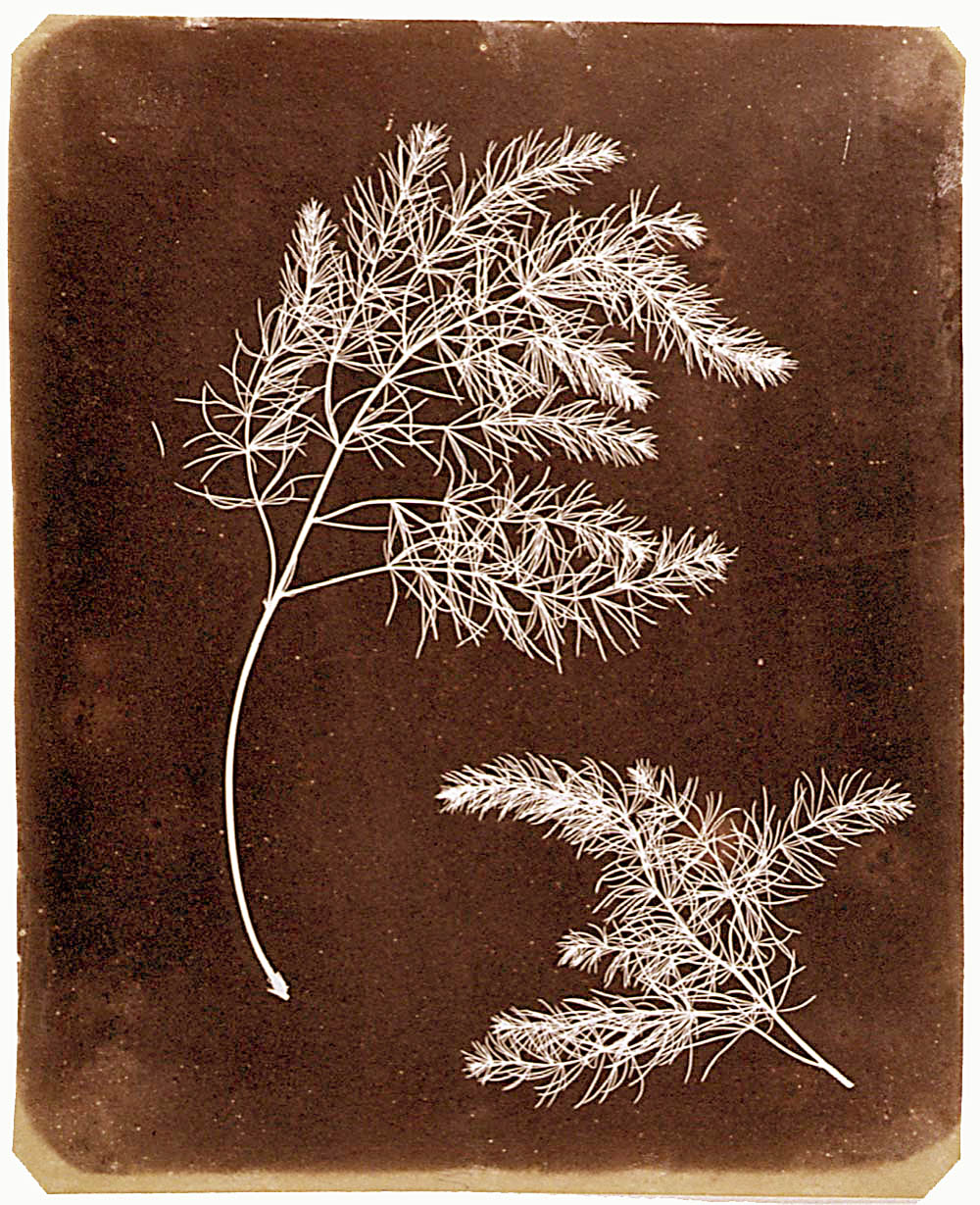 photogenic drawing de William Henri Fox Talbot (1800/1877), com data de c. 1839.